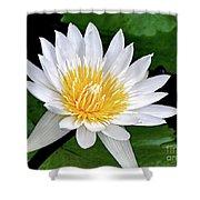 Hawaiian White Water Lily Shower Curtain