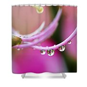 Hawaiin Rain Drops Shower Curtain