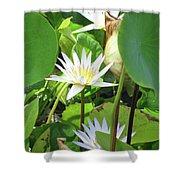 Hawiian Water Lily 01 - Kauai, Hawaii Shower Curtain