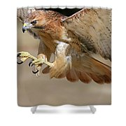 Hawk Attack Shower Curtain by Ronnie and Frances Howard
