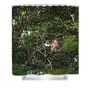 Hawk Drying Out Shower Curtain