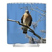 Hawk Eye Contact Shower Curtain