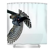 Osprey Flying Away With Prey Shower Curtain