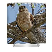 Hawk Gawk Shower Curtain