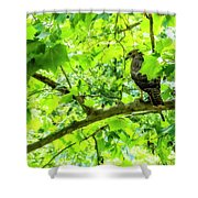Hawk In Sycamore Shower Curtain