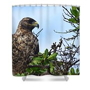 Hawk In The Tree Shower Curtain