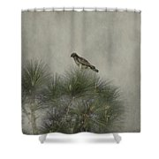 Hawk In The Treetop Shower Curtain