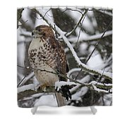 Hawk In Winter Shower Curtain