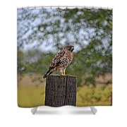 Hawk On A Fence Post Shower Curtain