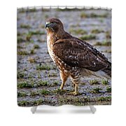 Hawk On A Walk Shower Curtain