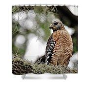 Hawk On Watch Shower Curtain