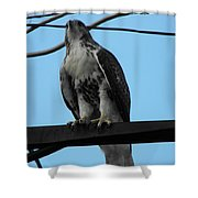 Hawk Urban Hunting Shower Curtain
