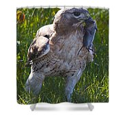 Hawk With Dinner Shower Curtain