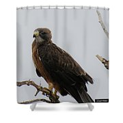 Hawking Good Time Shower Curtain