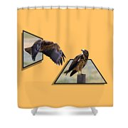Hawks Shower Curtain by Shane Bechler