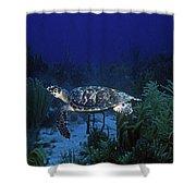 Hawksbill Sea Turtle 1 Shower Curtain