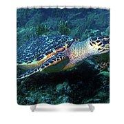 Hawksbill Sea Turtle 3 Shower Curtain