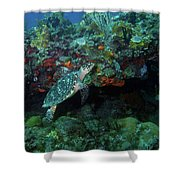 Hawksbill Sea Turtle 4 Shower Curtain