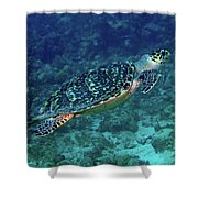 Hawksbill Sea Turtle 5 Shower Curtain
