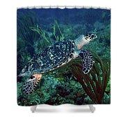 Hawksbill Sea Turtle 7 Shower Curtain
