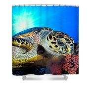 Hawksbill Turtle Shower Curtain
