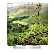 Hawthorn Branch With View To Wicklow Hills. Ireland Shower Curtain
