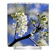Hawthorn Shower Curtain