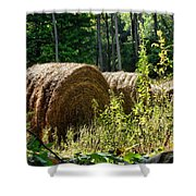 Hay Bay Rolls Shower Curtain