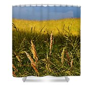 Hay Field Ready To Cut Shower Curtain