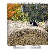Hay Kitty Shower Curtain