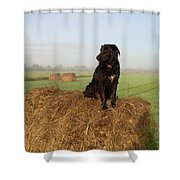 Hay There Black Dog Shower Curtain
