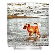 hd 342 Frisbee Dog hdr Shower Curtain