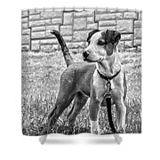 Hdr America Breed Shower Curtain