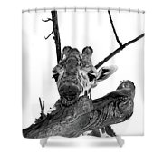 Head In The Trees Shower Curtain