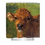 Head Of A Calf Shower Curtain