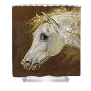 Head Of A Grey Arabian Horse  Shower Curtain