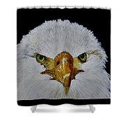 Head Of An Eagle  Shower Curtain