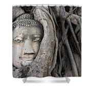 Head Of Buddha Statue In The Tree Roots Shower Curtain