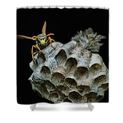 Head-on - Paper Wasp - Nest Shower Curtain