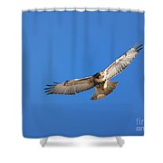 Head On Soar Shower Curtain