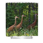 Headed For The Woods Shower Curtain