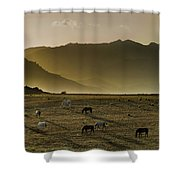Heading Home In The Evening Shower Curtain