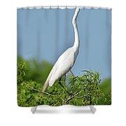 Headless Great Egret Shower Curtain