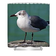 Hearing Voices Shower Curtain