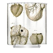 Heart And Muscle Fibers, 18th Century Shower Curtain