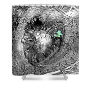 Heart Of A Tree 2 Shower Curtain
