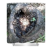 Heart Of A Tree  Shower Curtain