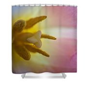 Heart Of The Tulip Flower Shower Curtain