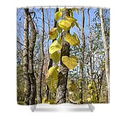 Heart Shaped Leaves Wrapped Around A Tree Shower Curtain