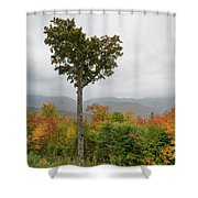 Heart Tree - Kancamagus Highway, New Hampshire Shower Curtain by Erin Paul Donovan